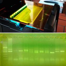Gerät zur Sichtbarmachung von DNA in einem Agarosegel (Transilluminator mit Amberfilter)