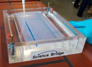 Vorbereitungen einer Agarose-Gelelektrophorese: Proben (blau) werden mit einer Pipette in die Taschen eines Agarosegels überführt